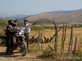Glad fåraherde i Albanien