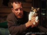 Söt kisse