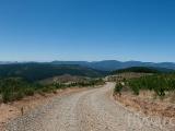 panorama-skog
