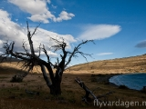 Träd, moln och himmel