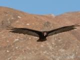 Finful fågel