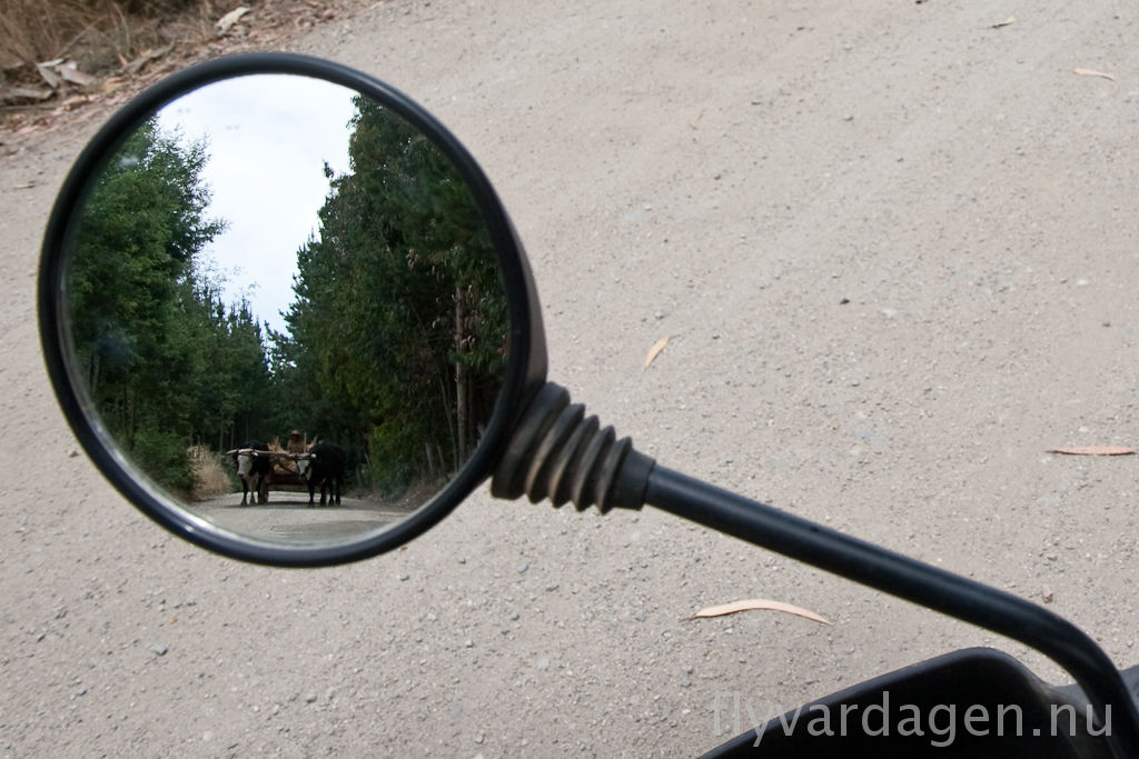 I backspegeln