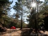 Camping i skogsglänta
