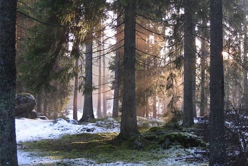 skogsljus.jpg