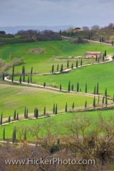 Zigzagging road lined by Cypress trees in the Tuscan landscape, Province of Siena, Region of Tuscany, Italy, Europe.