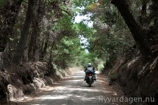 Mera skogsvägar
